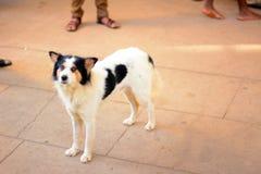 Hond die zich op het platform bevinden Stock Afbeelding