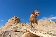Hond die zich op klip bevinden royalty-vrije stock fotografie