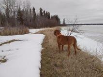 Hond die zich op kust bevinden Stock Afbeeldingen
