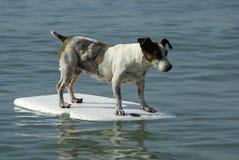 Hond die zich op vlotter bevindt stock foto's