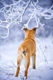 Hond die zich in sneeuw bevindt stock afbeelding