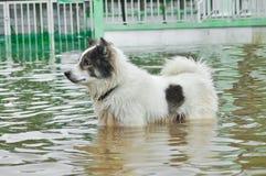 Hond die zich in water bevinden stock foto's