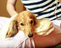 Hond die zijn bont krijgen met een ventilator droog bij groomer stock fotografie