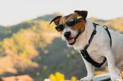 Hond die zonnebril dragen als het gelukkige toerist stellen op observatiepunt boven berg stock foto