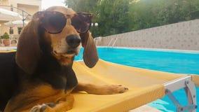 Hond die zonnebril dragen die op een ligstoel zitten Een grappig ogenblik stock footage