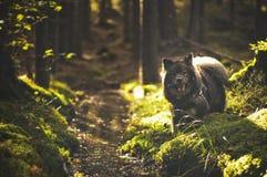 Hond door de stroom Stock Fotografie