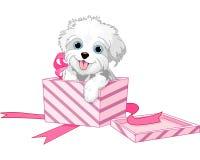 Hond in doos stock illustratie