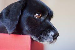 Hond in doos stock afbeelding
