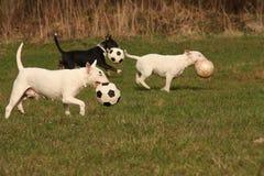 Hond drie Stock Afbeeldingen