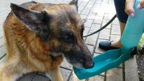 Hond drinkwater stock footage