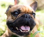 Hond drinkwater van een kom in openlucht royalty-vrije stock foto