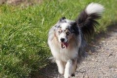 Hond in Duitsland Stock Afbeelding