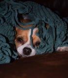 Hond in een deken Royalty-vrije Stock Foto's