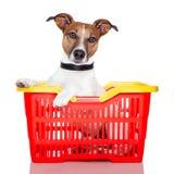 Hond in een het winkelen mand Stock Afbeeldingen