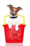 Hond in een het winkelen mand Royalty-vrije Stock Afbeelding