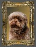 Hond in een kader royalty-vrije stock foto's