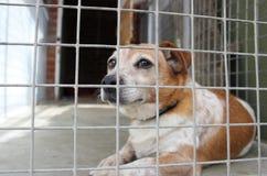 Hond in een kooi Stock Afbeeldingen