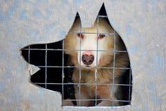 Hond in een kooi stock afbeelding