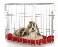 Hond in een krat Royalty-vrije Stock Foto's