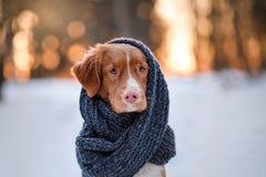 Hond in een park op de aard, de winter stock fotografie