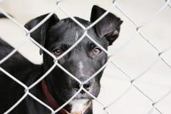 Hond in een pen stock afbeelding