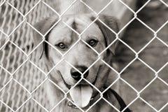 Hond in een pen Stock Foto