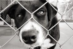 Hond in een pen Royalty-vrije Stock Afbeelding