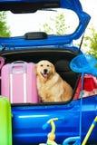 Hond en bagage in de boomstam royalty-vrije stock foto's