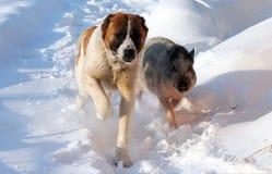 Hond en beer royalty-vrije stock afbeelding