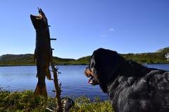 Hond en Bergforel Royalty-vrije Stock Afbeelding