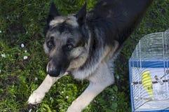 Hond en Budgie Stock Afbeelding