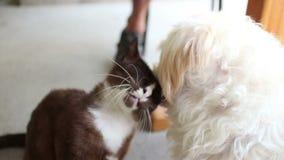 Hond en Cat Friends: De Kat en Cat Moves Head van hondlikken om Meer Liefde te krijgen stock videobeelden