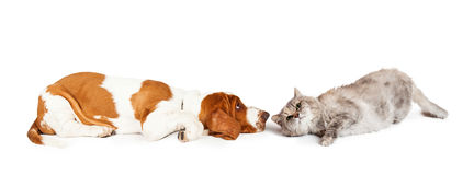 Hond en Cat Laying Facing Each Other Stock Afbeelding