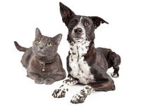Hond en Cat Laying Looking Up royalty-vrije stock foto