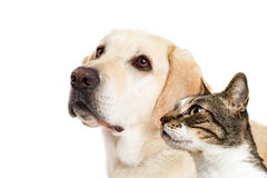 Hond en Cat Together Closeup Looking Side Royalty-vrije Stock Foto's