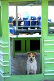 Hond en deur Royalty-vrije Stock Foto's