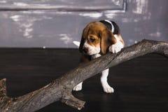 Hond en droge tak stock foto