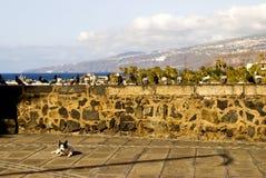 Hond en duiven Royalty-vrije Stock Fotografie