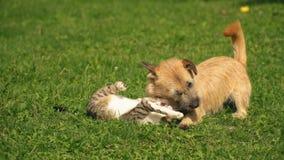 Hond en een kat stock videobeelden