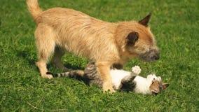 Hond en een kat stock video