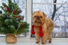 Hond en een Kerstboom op de vensterbank Stock Foto