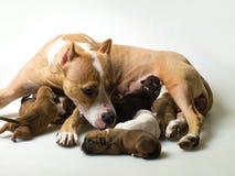 Hond en een paar kleine puppy Stock Fotografie