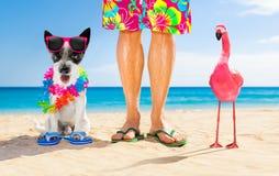 Hond en eigenaar de zomervakantie stock afbeelding