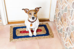 Hond en eigenaar met leiband stock foto's