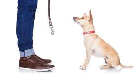 Hond en eigenaar voor een gang stock fotografie