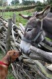 Hond en ezel stock foto
