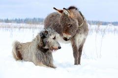 Hond en ezel stock afbeelding