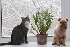 Hond en grijze kat op het venster Stock Foto