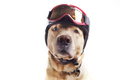 Hond en helm Royalty-vrije Stock Fotografie