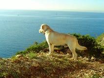 Hond en het overzees Stock Afbeelding